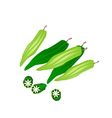 Fresh Okra or Lady Finger on White Background vector image vector image