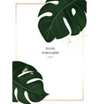 hand drawn monstera palm leavesin jungle vector image vector image