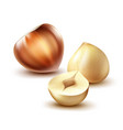 whole and cut hazelnuts vector image vector image