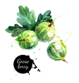 Hand drawn watercolor painting gooseberry on white vector image vector image