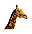 head giraffe animal herbivore african wildlife vector image vector image