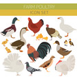 poultry farming chicken duck goose turkey pigeon vector image vector image