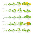 set of growth stages cucurbitaceae plants pumpkin vector image