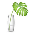 leaf monstera in vase vector image vector image