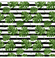 leaves plant monstera seamless pattern on a vector image