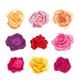 Set of beautiful bright colorful rosebuds isolated