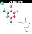 Asparagine proteinogenic amino acid vector image vector image