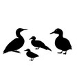 black silhouette a duck on white background vector image vector image