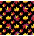 maple leaves on black background vector image vector image