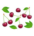 set of cherries with green vector image vector image