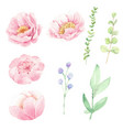 watercolor pink peony flower and green leaves vector image vector image