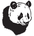 head of panda bear vector image vector image
