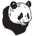 Head of panda bear vector image