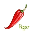 Red pepper vegetable sketch icon vector image
