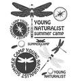 Set of vintage dragonfly labels badges and design vector image