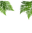 fern leaf silhouette background on white vector image vector image