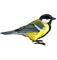 great titmouse vector image vector image