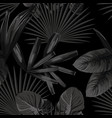 monochrome black white tropical vector image vector image