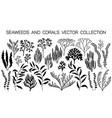 seaweeds and coral reef underwater plans vector image