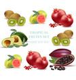 summer fruits avocado papaya kiwi pomegranate vector image vector image