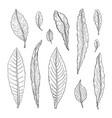 types leaf outline leaves different types vector image