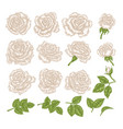 white roses hand drawn flowers and vector image vector image