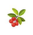 cranberry icon isolated vector image