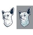 chihuahua dog vector image vector image