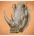 engraving rhino retro vector image vector image