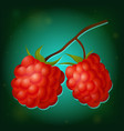 forest raspberry with leaves on branch vector image vector image