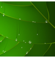 green leaf with drops vector image vector image
