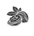 walnut glyph icon vector image vector image