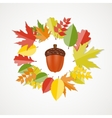 Acorn with Leaves Autumn vector image