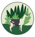 alpine goat on floral background breeds vector image vector image