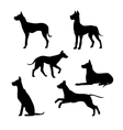 Breed of a dog great dane silhouettes vector image