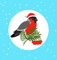 bullfinch bird with santa hat vector image vector image