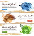 tropical plants hand drawn banners vector image vector image