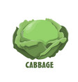 logo cabbage farm design vector image vector image