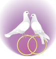 Two white pigeons and gold wedding rings vector image