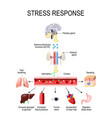 activation of the stress system vector image vector image