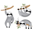 cute sloth bear animal set vector image