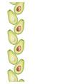 seamless decorative border of avocado slice vector image