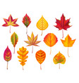 autumn leaves fallen leaf dry fall leafy litter vector image vector image