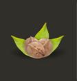 realistic tree walnut and walnut leaf vector image