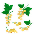 set of cartoon white currant berries isolated on vector image vector image