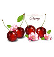 cherry fruits with flowers realistic vector image vector image