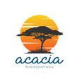 acacia tree silhouette with a sunset background v vector image vector image