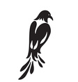 Bird similar to magpie Stylized silhouette black vector image
