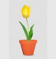 realistic 3d tulip in flower pot design element vector image vector image