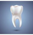 realistic teeth anatomy vector image